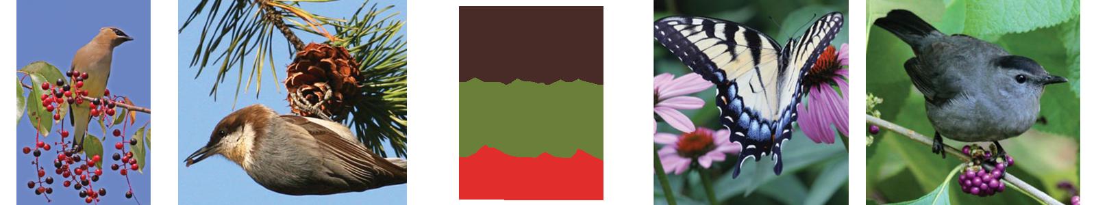 native plants - Creating Bird Friendly Communities